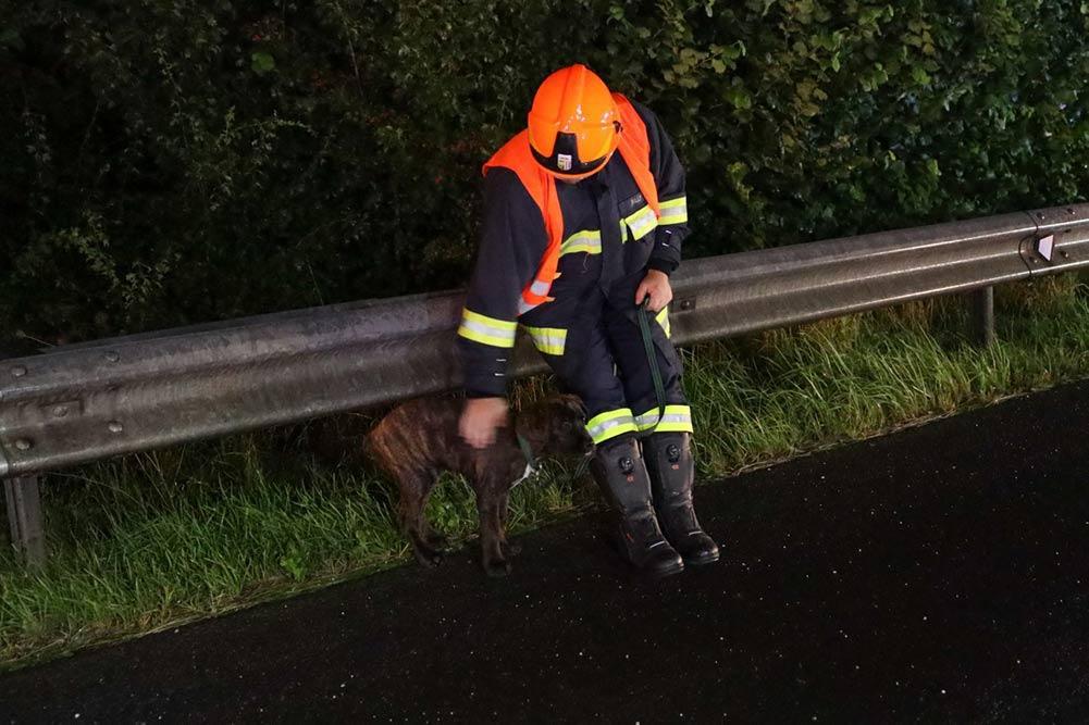 Feuerwehr Inzerdorf - Holztransporter crasht 01-09-2020 - 4